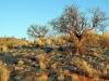 dsc04916-tsonab-valley