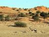 img_5895-transfrontier-kgalagadi-np