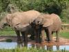 img_7511-addo-elephant-np