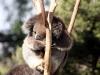 img_7904-melbourne-zoo