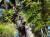 dsc07813-waipoua-forest-kauri