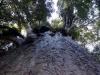 dsc07846-waipoua-forest-kauri-yakas