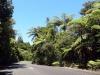 dsc07869-waipoua-forest