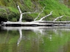 dsc08032-whanganui-river-journey