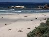 img_4817-kangaroo-island-seal-bay