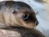 img_4822-kangaroo-island-seal-bay