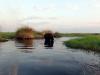 dsc02919-okavango-delta