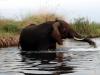 dsc02922-okavango-delta