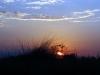 dsc02924-okavango-delta
