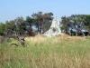 dsc02934-okavango-delta
