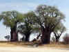 dsc03118-nxai-pan-baines-baobab