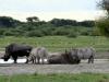 img_4362khama-rhino-sanctuary
