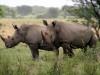 img_4375-khama-rhino-sanctuary