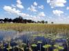 dsc09630-okavango-delta