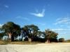 img_9916-nxai-pan-baines-baobab