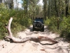 img_9368-fraser-island-central-lakes-scenic-drive