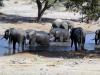 dsc01064-tembe-elefant-park