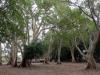 dsc01069-ndumo-game-reserve