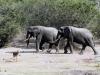 img_2726-tembe-elefant-park