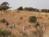 dsc00822-spioenkop-nature-reserve