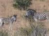 dsc00823-spioenkop-nature-reserve
