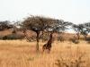 img_2414-spioenkop-nature-reserve