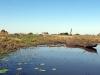 dsc00040-bangweula-wetland