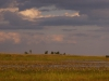 dsc00061-bangweula-wetland