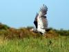 img_0113-shoebill