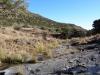 dsc00566-mountain-zebra-np