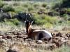 img_2275-mountain-zebra-np-red-hardebeest