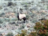 img_2279-mountain-zebra-np-gemsbok