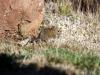 img_2290-mountain-zebra-np-mouse