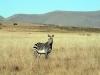 img_2307-mountain-zebra-np-mountain-zebra