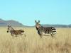 img_2313-mountain-zebra-np-mountain-zebra