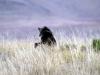 img_2317-mountain-zebra-np-baboon-pavian
