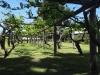 dsc06764-sandelford-winery