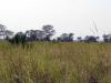 dsc01334-gorongosa