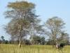 dsc01335-gorongosa