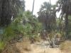 dsc01344-gorongosa