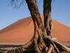 img_6934-dune-45