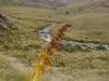dsc08665-routeburn-track