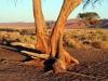 img_9672-sessriem-dune-45