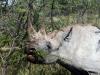 img_5424-etosha-np-black-rhino