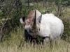 img_5430-etosha-np-black-rhino