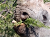 img_9811-etosha-np-black-rhino