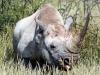 img_9814-etosha-np-black-rhino