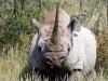 img_9816-etosha-np-black-rhino