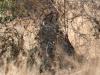img_0446-ckgr-gepard