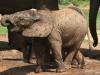 img_5200-addo-elephant-np